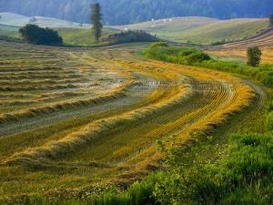 Trimmed Fields by Jim Craigmyle