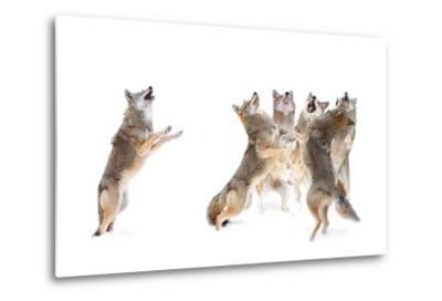 The Choir - Coyotes