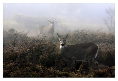 The Rut In On White-Tailed Deer