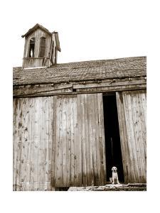Barnyard Dog by Jim Dratfield