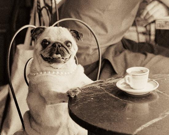 jim-dratfield-cafe-pug