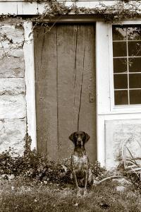 I am Home by Jim Dratfield