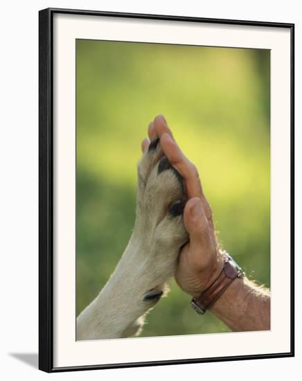 Jim Dutcher Places His Hand to the Paw of a Gray Wolf, Canis Lupus-Jim And Jamie Dutcher-Framed Photographic Print