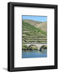 Portugal, Peredos Dos, Bridge and Vineyards Along Douro River by Jim Engelbrecht