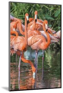 USA, Florida, Orlando, Pink Flamingos, Gatorland by Jim Engelbrecht