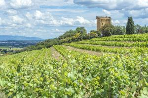 Vineyard, Rhone Valley, Ruins of castle, Chateauneuf du Pape, France by Jim Engelbrecht