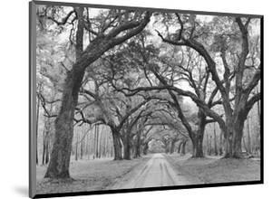 Oak Arches by Jim Morris