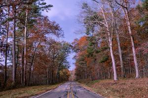 A Deserted Road Surrounded by Colorful Foliage by Jim Reed