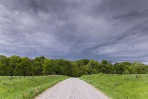 A Gravel Road Disappears into a Field of Trees Beneath a Stormy Sky by Jim Reed