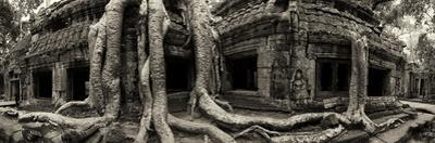 Strangler Fig Tree Roots Engulf Temple Ruins at Ta Prohm Temple by Jim Ricardson