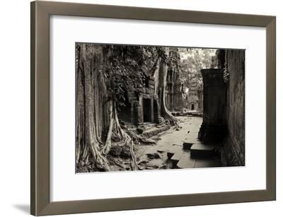 Strangler Fig Trees and Lichen Engulf Temple Ruins at Ta Prohm Temple