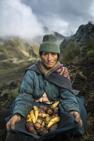 A Farmer Harvests Varieties of Potatoes to Sell at Market