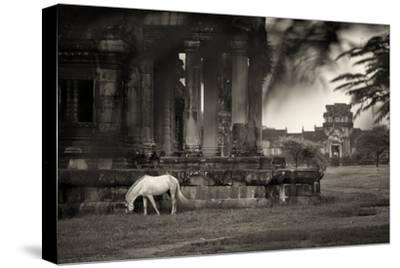 A Horse Grazes Among Ruins on the Grounds of Angkor Wat