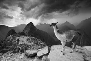 A Llama Overlooks the Pre-Columbian Inca Ruins of Machu Picchu by Jim Richardson
