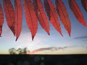 Autumn red sumac leaves on the Tallgrass Prairie Preserve by Jim Richardson