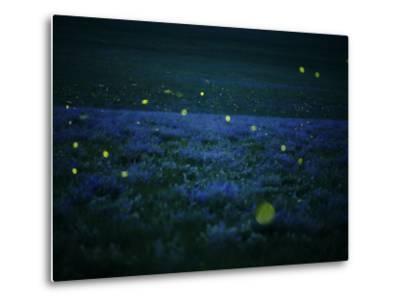 Lightning bugs and wild alfalfa blanket the prairie