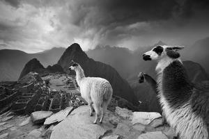 Llamas Overlook the Pre-Columbian Inca Ruins of Machu Picchu by Jim Richardson
