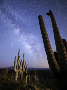 Stars and the Milky Way Above a Hillside of Saguaro Cactus by Jim Richardson