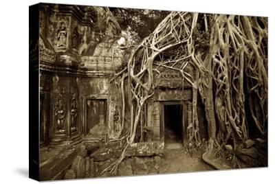 Strangler Fig Tree Roots Devour Temple Ruins at Ta Prohm Temple