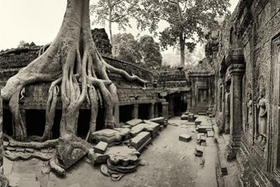 Strangler Fig Tree Roots Engulf Temple Ruins at Ta Prohm Temple by Jim Richardson