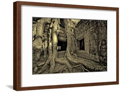 Strangler Fig Tree Roots Engulf Temple Ruins at Ta Prohm Temple