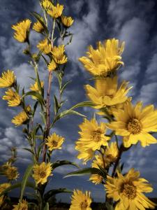 Wildflowers blooming on the Kansas prairie by Jim Richardson