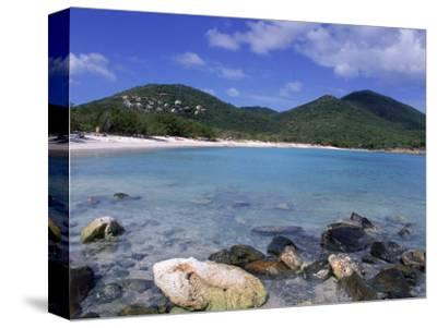 Coral, Salt Pond Bay, St. John, USVI