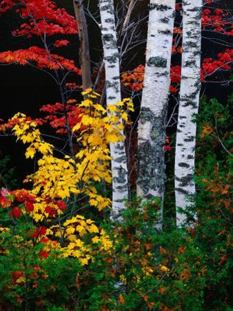 Fall Color, Old Forge Area, Adirondack Mountains, NY