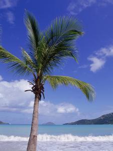 Palm Tree, Magens Bay, St. Thomas, USVI by Jim Schwabel