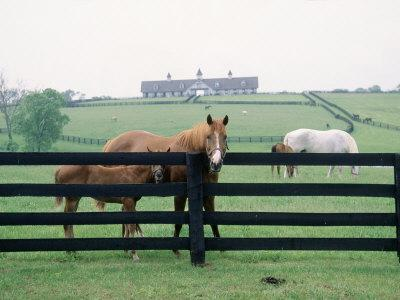Woodford County Horse Farms, KY