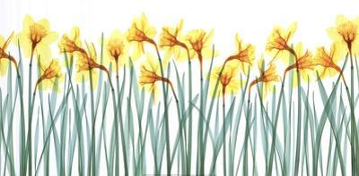 Floral Delight I