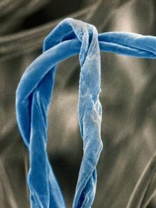 Cotton Fibers by Jim Zuckerman