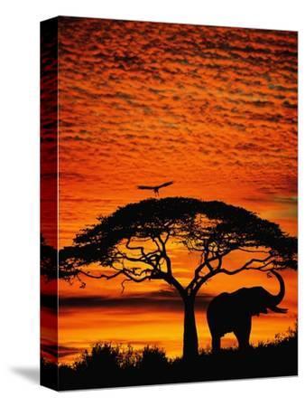 Elephant Under Broad Tree