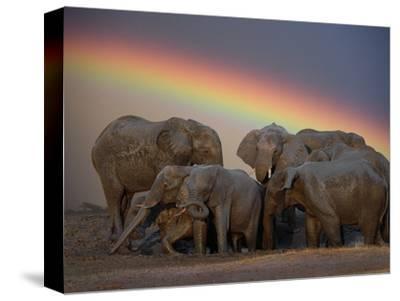Elephants Taking Mud Bath