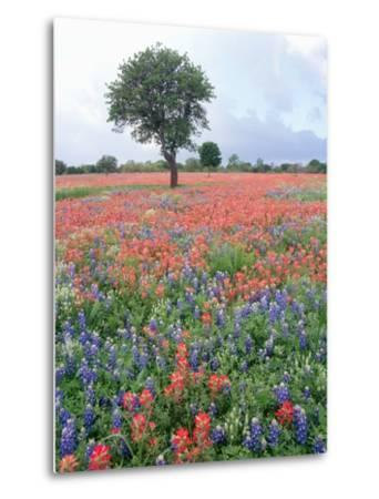 Field of Red and Blue Flowers