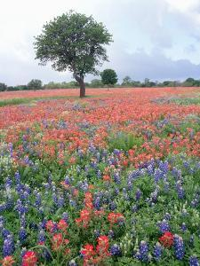 Field of Red and Blue Flowers by Jim Zuckerman