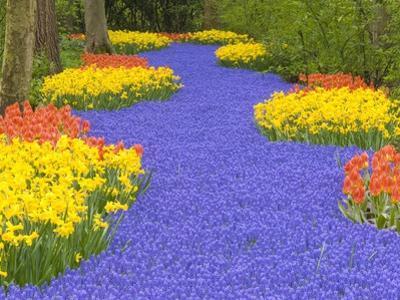Flowers at Keukenhof Garden