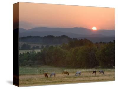 Horses Graze at Sunrise, Provence, France