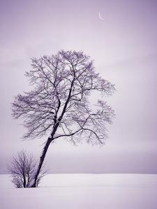 Lone Tree in Snow by Jim Zuckerman