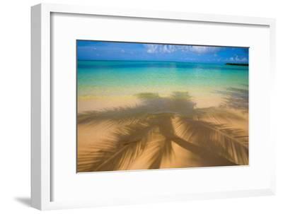 Palm Shadow Paradise