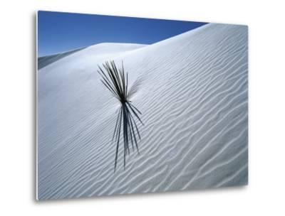 Solitary Yucca Grows on Gypsum Sand Dune, White Sands National Monument, New Mexico, USA