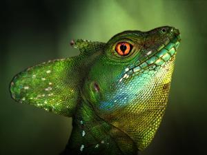 Basilisca Verde by Jimmy Hoffman