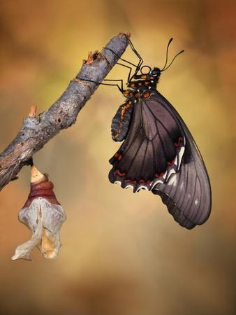 Birth of a Swallowtail