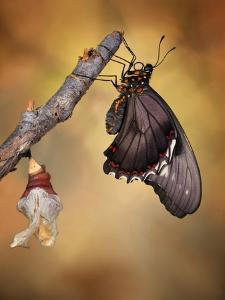 Birth of a Swallowtail by Jimmy Hoffman