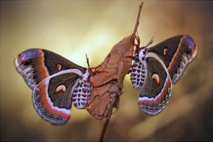 Robin Moths by Jimmy Hoffman