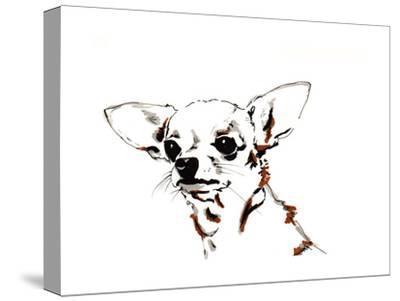 Big Ears the Chihuahua, 2012