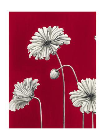 In Bloom C - Recolor
