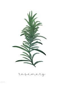 Rosemary by Jo Moulton