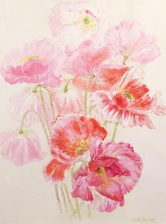 Shirley Poppies by Joan Thewsey