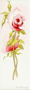 Two Queen Elizabeth Roses, 2000 by Joan Thewsey